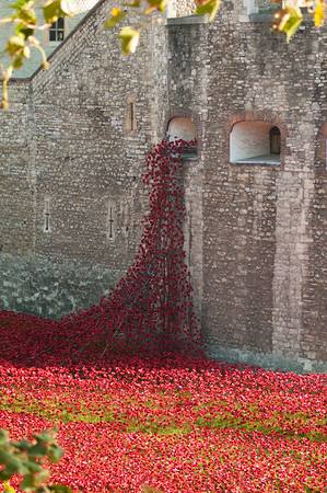 20141031 - London & Poppies
