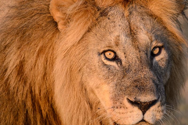 20160215__KET7269_Serengeti_Day_7.jpg