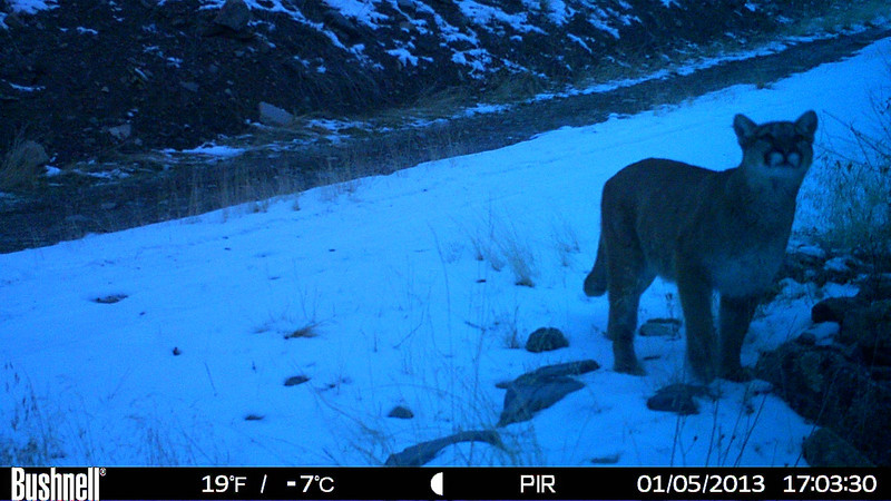 Trailcam pictures