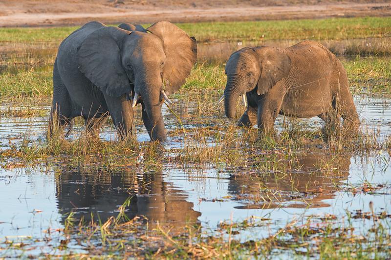 Africa-39.jpg