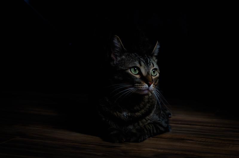 lokeycat (1 of 1).jpg