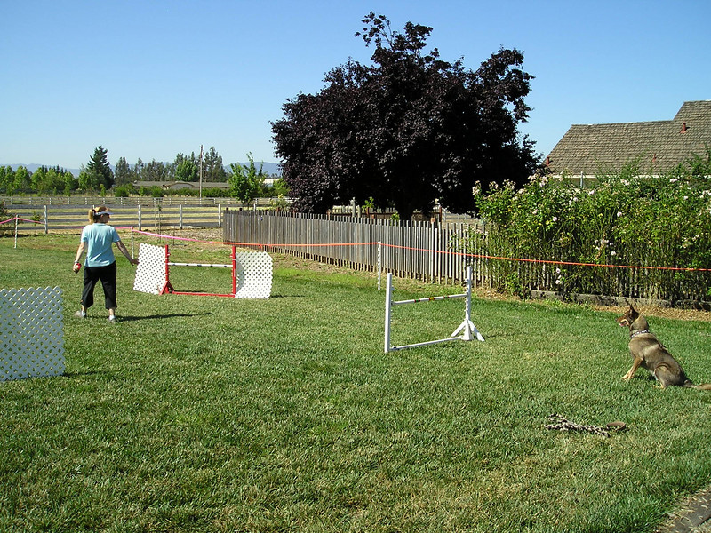 Workin' Paws set up four fields for us to practice in. (Deanna and Arrow start the Jumpers course.)