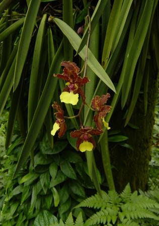 the Orchid Garden in the Singapore Botanic Garden