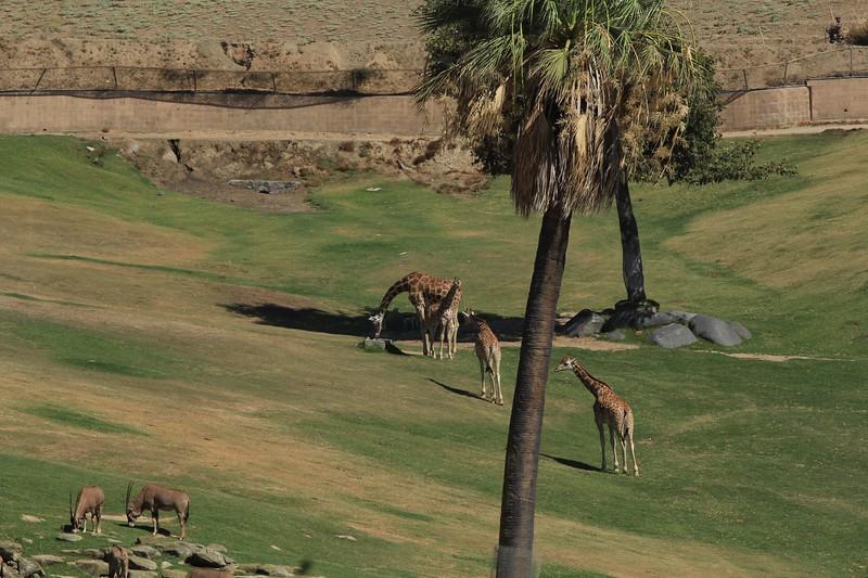 San Diego wild animal pakr 201700045.jpg