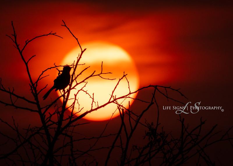 LS - Birds - Earth Day Sunset-1.jpg