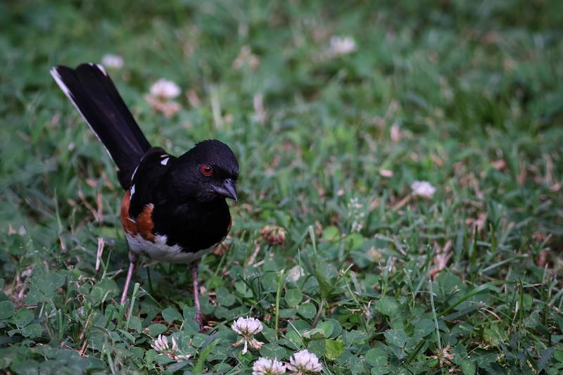 birds-5.jpg