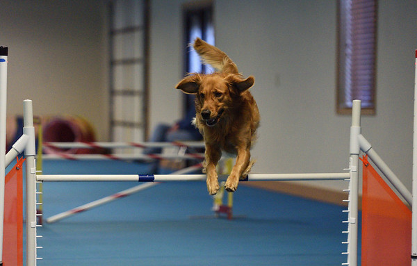 Agility Trial Sat November 17th 2018