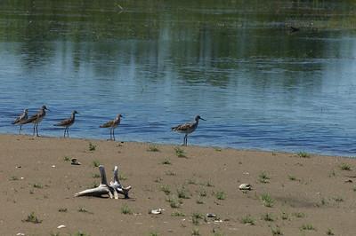Birds of NB 2011