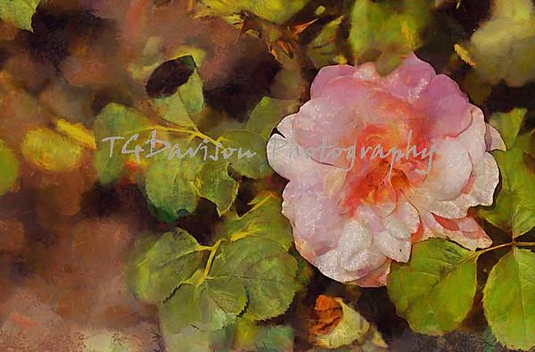 Cantigny Flower Gardens 9/12/21
