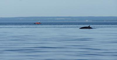 Whales - Tadoussac, Quebec 2011