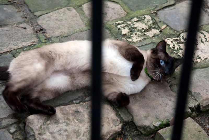 chartres_cat.jpg