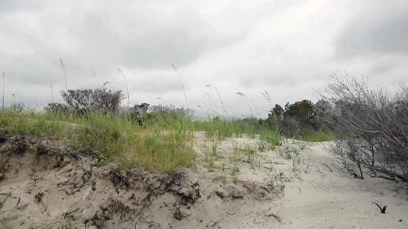 Sapelo Sea Oats on Dunes Loop2.mp4