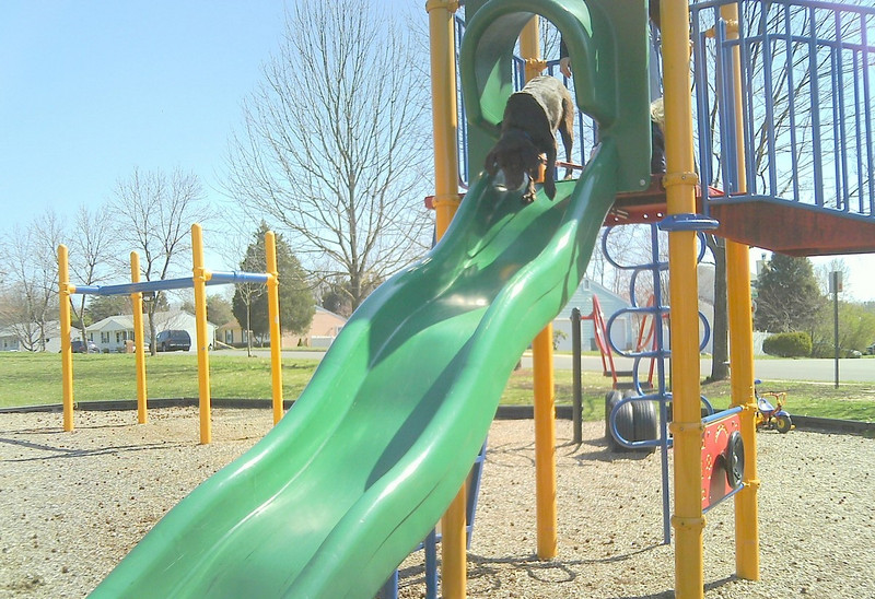 Lily on the Slide.jpg