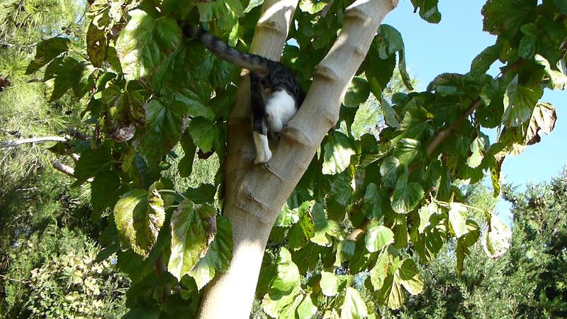 Katze auf Baum.MTS