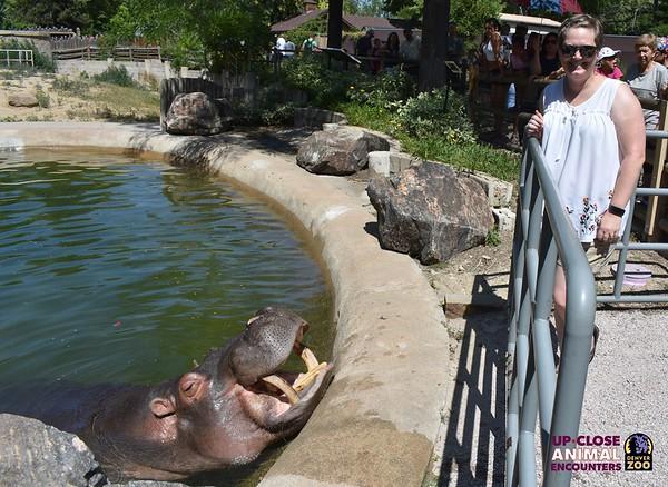 Hippo Encounter