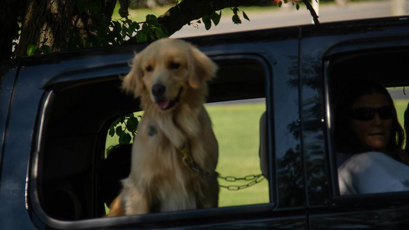 PuppyParty18-518.jpg