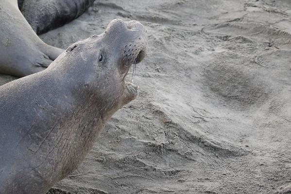 Elephant Seals  and Monarchs January 2016