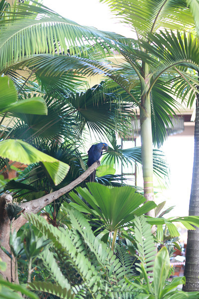 Kauai_D5_AM 220.jpg