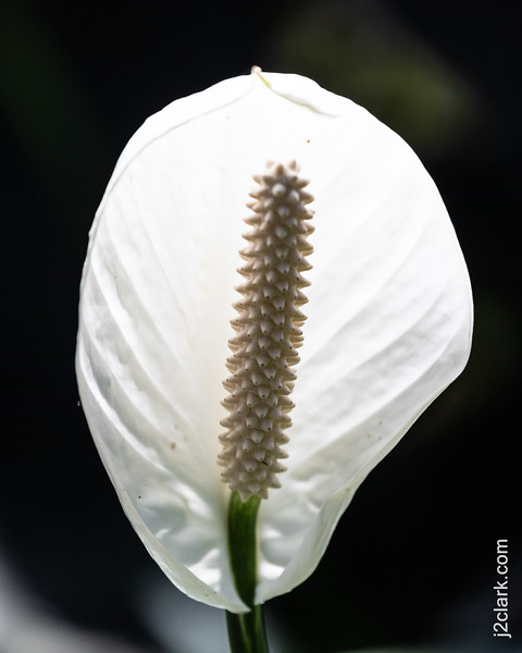 Flowers of Hawaii Tropical Botanical Garden