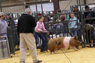 Swine 6