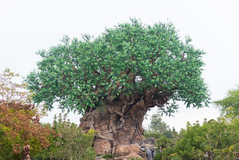 Tree of Life - Animal Kingdom Walt Disney World