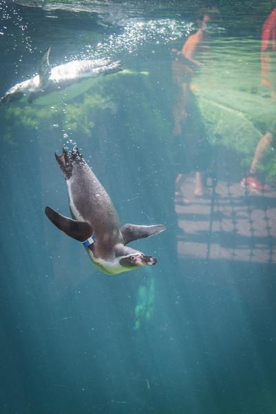 Syracuse Zoo August 2020-25.jpg