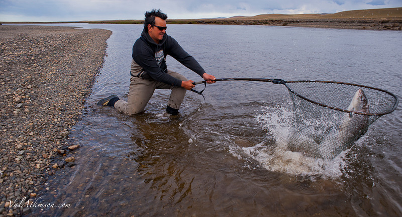 Guide netting a large sea trout