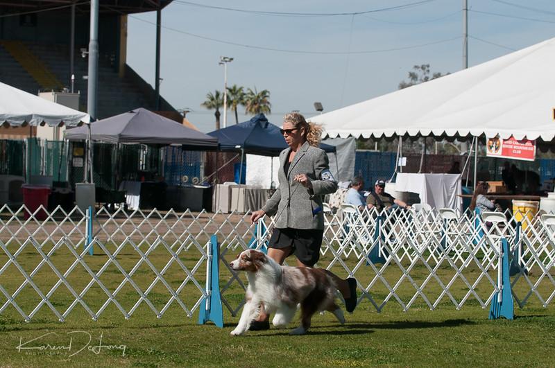 20170205_Australian Shepherds_Lost Dutchman Kennel Club-185.jpg