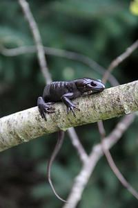 Amphibians Misc