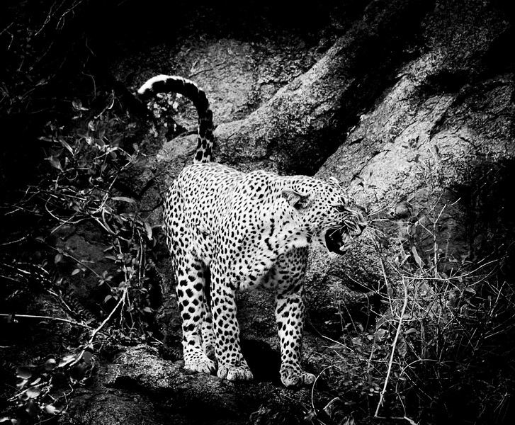 Magical Moments with Mama Leopard