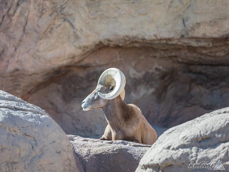 Arizona-Sonora Desert Museum-084.jpg