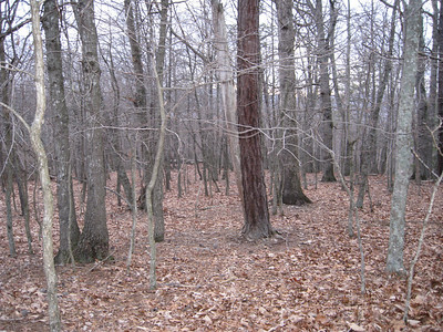 Our Land in VA!!!