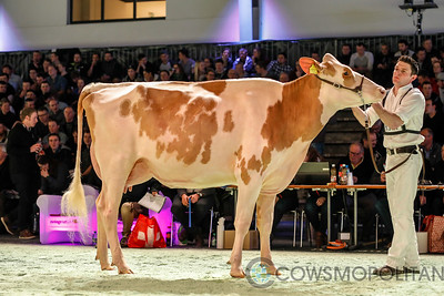 Swiss Expo Red Holstein Int Cows 2018
