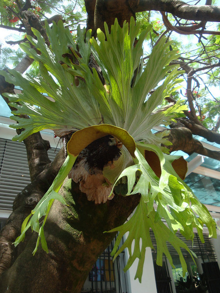 Noosa town was full of bizarre tropical plants...