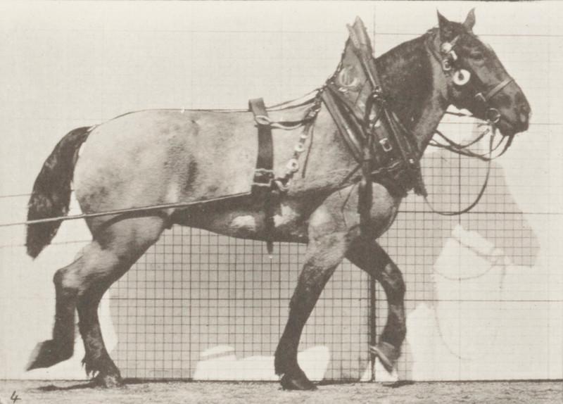 Horse Billy hauling