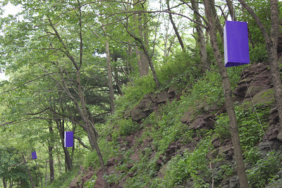 Emerald Ash Borer Study Traps, SR309, Hometown (6-27-2011)