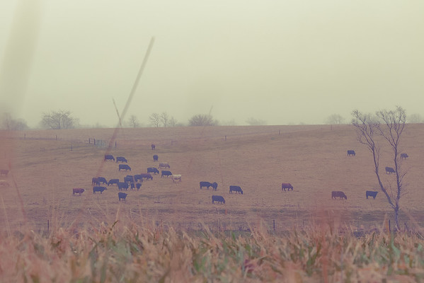 Fuhrmeister Farms Winter 2015