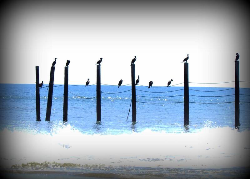 Outer Banks Corolla (236).jpg