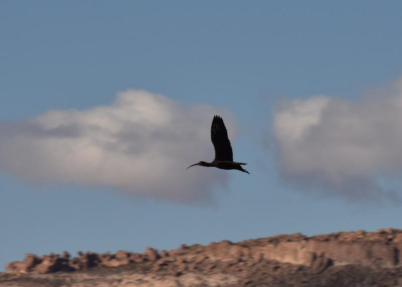 BOL_2782-7x5-Black Bird.jpg