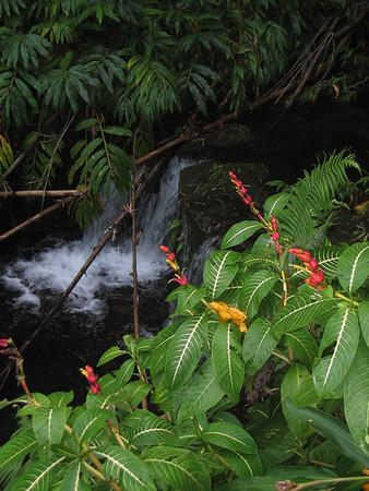 Volcanoes and Hilo Coast