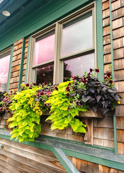 Acadia Nat'l Park-Terry's - July 2017-19.jpg