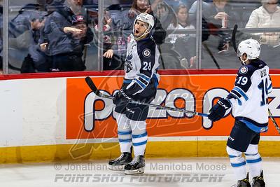2016-10-29 Moose vs Gulls