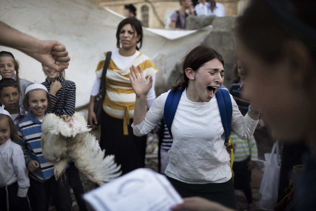 . A Jewish girl reacts as she drops a chicken that she was meant to swing over her head during the Kaparot ceremony on September 11, 2013 in Jerusalem. AFP PHOTO/MARCO LONGARI/AFP/Getty Images