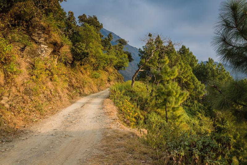 Pangot, India, 2014