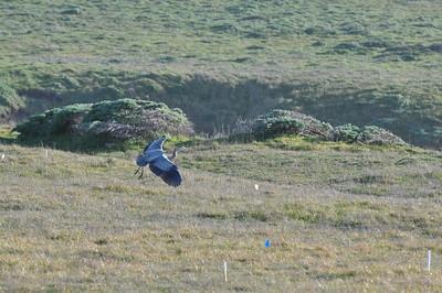 Birds-Waterfowl, Herons, Shorebirds