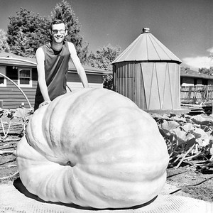 Giant Pumpkins - Giant Personalties - Photo Series