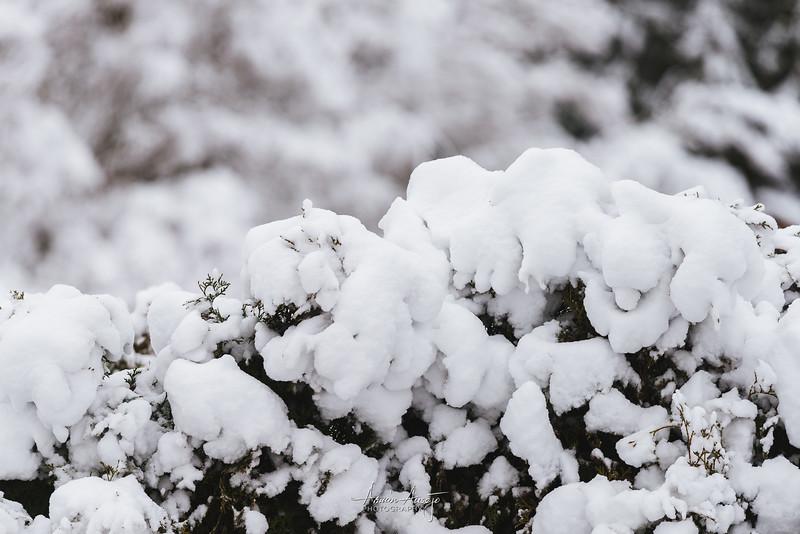 SnowWedgwoodFeb2019-2.jpg