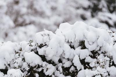 Snow Wedgwood February 2019