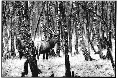 Sauvages de Fontainebleau