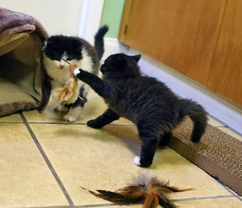 3 Foster Kittens 8-13